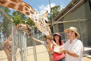 ...courtesy of, and Copyright Australia Zoo